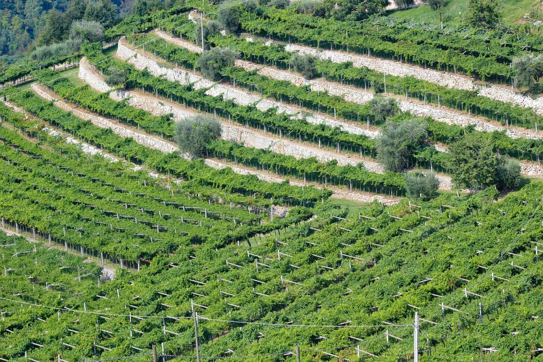 Marano di Valpolicella - Marogne