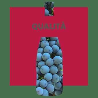 sezione vini del consorzio valpolicella